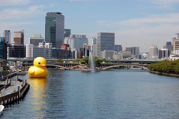 Duckb29