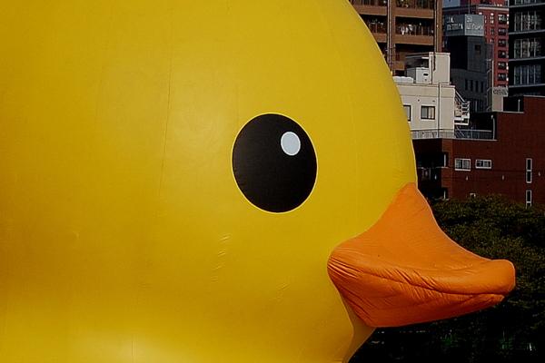 Duckb8